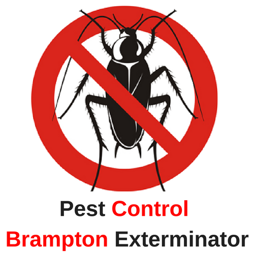 Pest Control Brampton Exterminators
