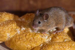 mice home pest control