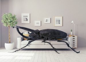 giant beetle on little white couch