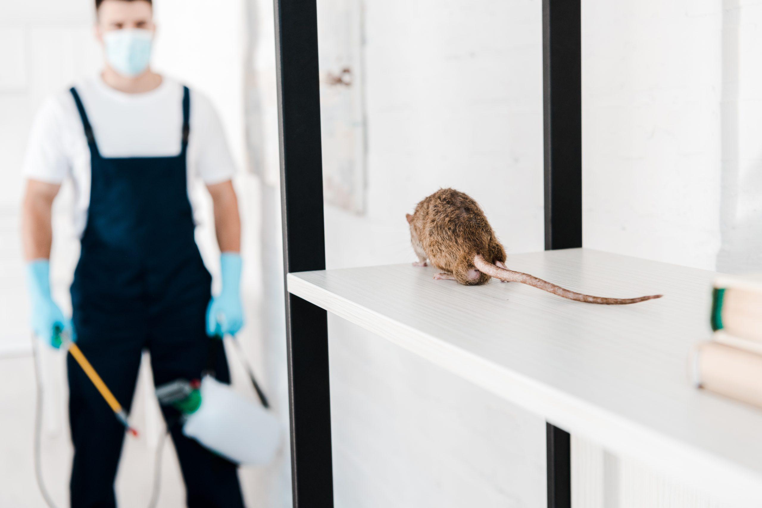 selective focus of rat near exterminator holding toxic equipment